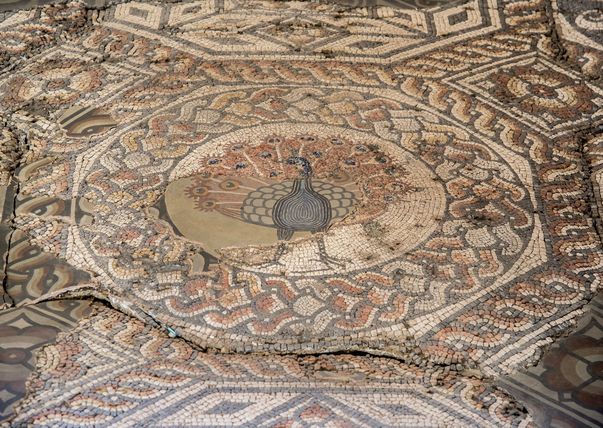 The central panel of the 2nd-century Peacock Mosaic Pavement discovered in 1898 at St Nicholas Street, now part of St Nicholas Circle. It came from a Roman town house, partly excavated in 1968 -