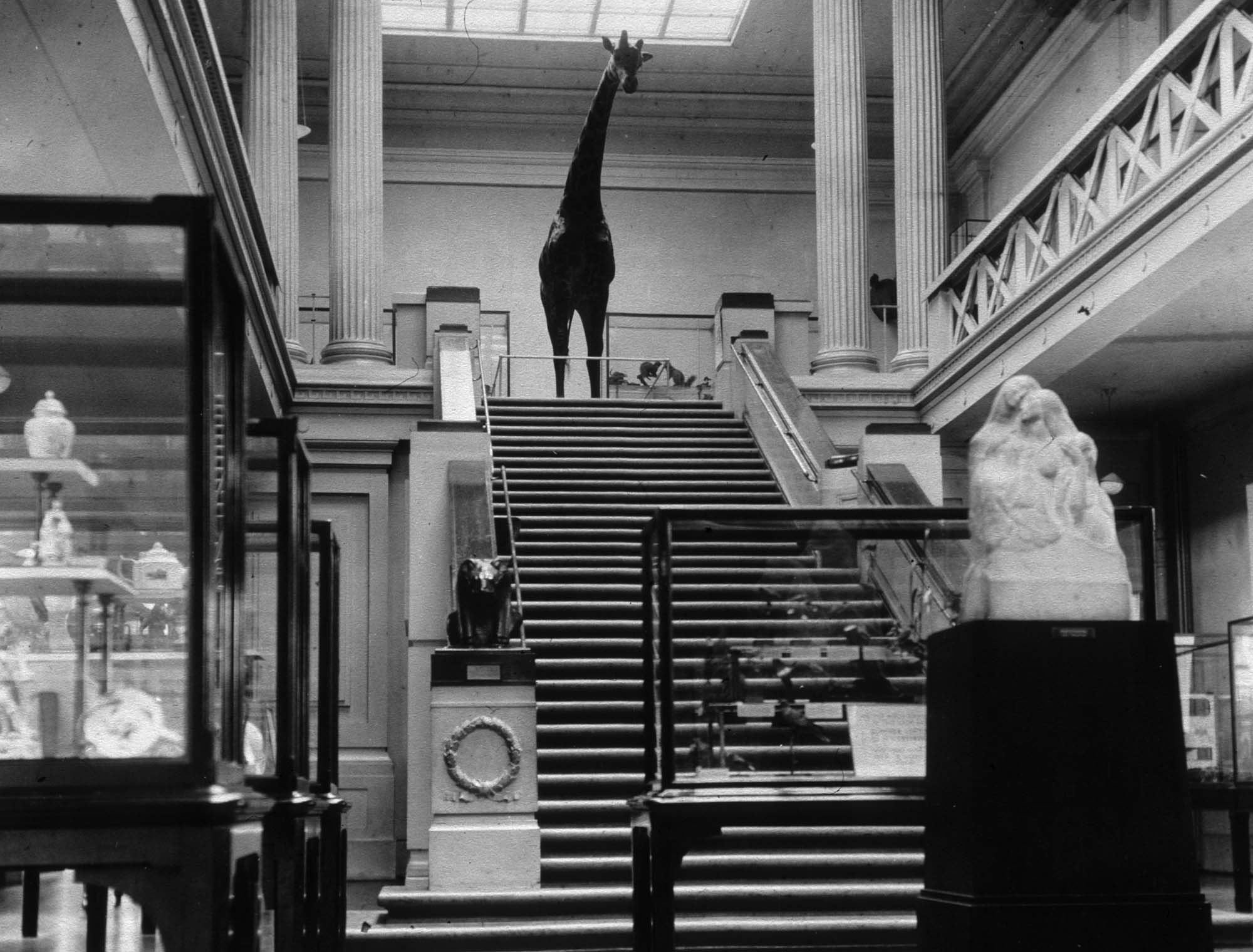 The main gallery with George the Giraffe, 1936 -